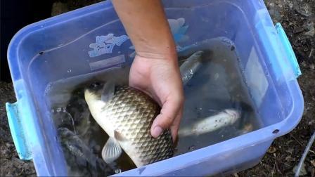 野钓一定要选好时间,夏季野钓一般选择早晚鱼口会比较好