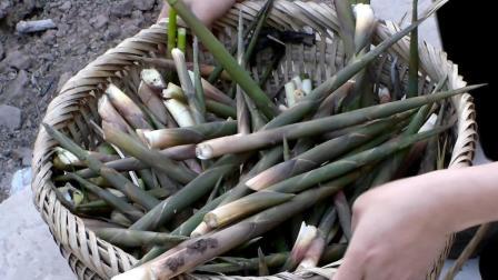 水竹笋不仅是笋中之王,同时它还含有丰富的营养价值,有不错的药用功效