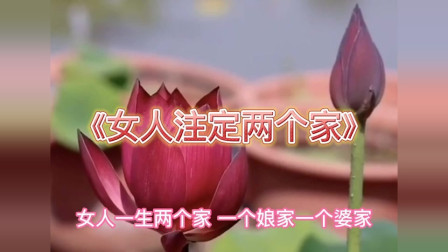 歌曲改编《女人注定两个家》,养女就像是养花,等她花开被人挖