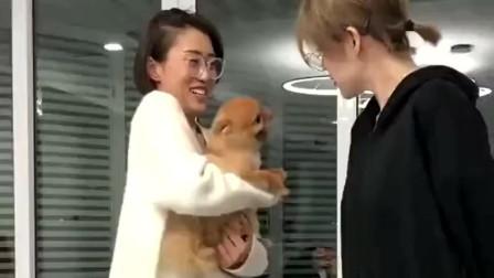 搞笑视频 当铲屎的不抱着狗仔和人吵架