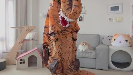 当铲屎官穿上恐龙玩偶服装,猫咪们的反应亮了……
