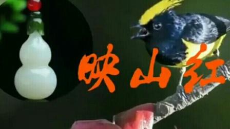 葫芦丝bB调演奏《映山红》(慢速)