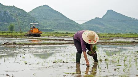 如今农民头也不回的进城务工,10年后,农村的土地由谁来种?