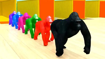 动物动漫 彩虹大猩猩钻过魔法喷泉变成了小猫咪