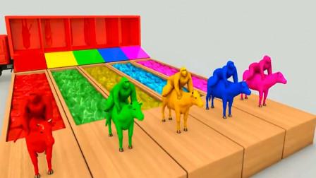 大猩猩骑着奶牛过河变颜色 亲子早教