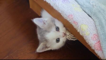 小奶猫想跳上窗户的样子太蠢萌了,最后还委屈得像个孩子!