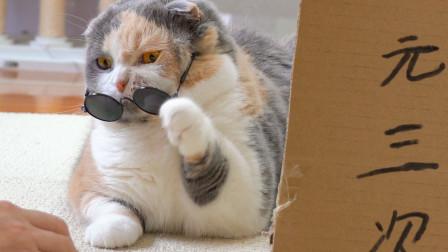 猫咪摆摊耍心眼套路顾客,结果把自己搭进去了