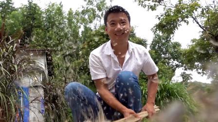 华农兄弟:山上长满了芒草,砍点来做扫把,很实用哦