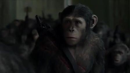 猩猩不肯服从命令杀人类,首领一气之下,直接把它从高楼丢下摔死