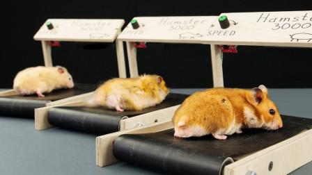 老外兴致大发,给仓鼠打造迷你版跑步机,网友:心都被萌化了!