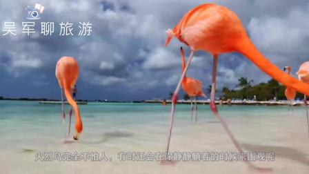 七彩天堂,去阿鲁巴看火烈鸟和马卡龙色的海岛