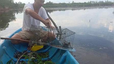 在越南制作诱惑陷阱捕捉螃蟹,美味螃蟹,野生螃蟹