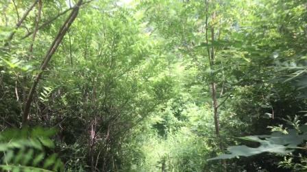 柳树棠梨大穿越,河流丛林峡谷过