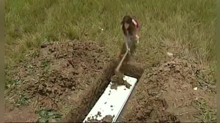 夫人被恶毒女活埋,结果突如其来的地震,奇迹发生了