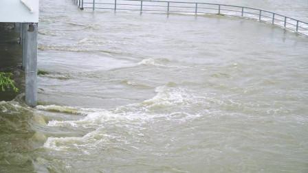 江苏沭阳上游洪水暴涨 九孔闸门全开泄洪 很多市民去现场抓鱼