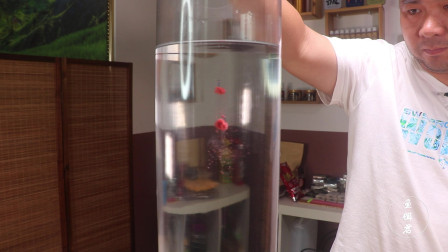 钓鱼王3.0时代改革性二代蒸汽鲫鱼饵,实测入水状态是否完美