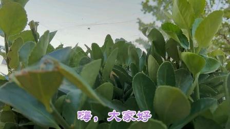 CCTV牛恩发现之旅:心读西游追梦源力(北京昌平2020.7.16)