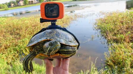 小伙脑洞大开,把摄像机绑在乌龟身上,结果你猜拍到了什么?