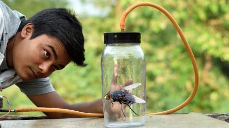 苍蝇在真空里还能飞起来吗?小伙好奇测试,结果让人大开眼界!