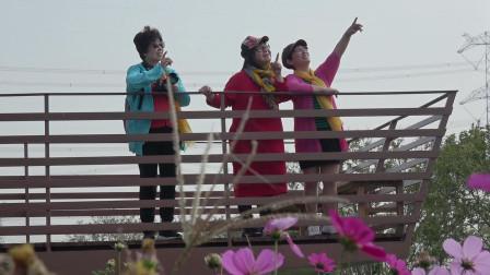 【养眼作品】寻梦园观赏格桑花