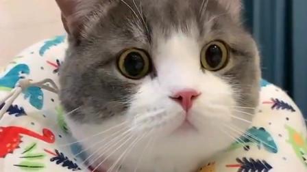 铲屎官卸妆后,猫咪就不认识了,这逃跑的小姿势太可爱了!