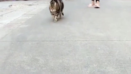 虎斑猫放奶奶家寄养了半年,我就明白了有种饿叫奶奶觉得你饿了!