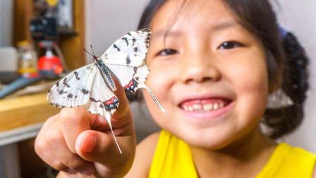 我在家里养蝴蝶!这是给孩子最惊喜的暑假礼物!