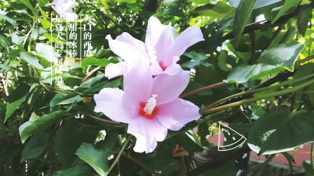 捕捉精彩的瞬间01 自然美景 生活百科 网络红歌 纯音乐 dj歌曲