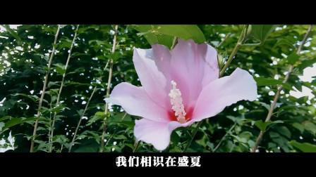 音乐视频08-自然美景-木槿花 纯音乐 dj歌曲 网络红歌 田园风景 风景优美的乡村美景