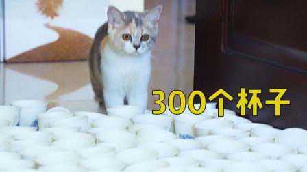 用300个杯子能挡住猫咪的去路吗?猫:就这?
