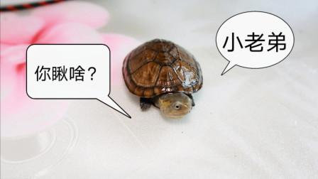 养龟up再次受到网友送龟,开箱一波从来没养过的龟