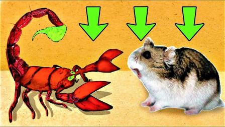 """当仓鼠误入""""蝎子""""迷宫,它能成功逃脱出来吗?网友:厉害了!"""