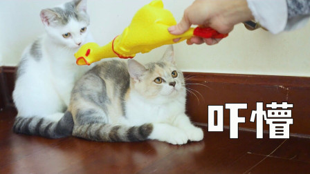 9只猫第一次见到尖叫鸡会有什么反应?