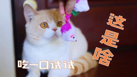 小猫咪见到100只假老鼠会有什么反应?猫:全吃了!