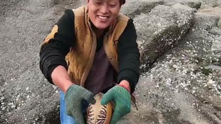 """赶海小伙海边发现200斤""""大鳗"""",谁捡谁发财"""