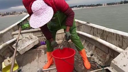 海蛎区隐藏靓货海鲜无人捡,小伙带着桶直接捡爆了