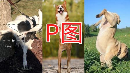 """狗发""""朋友圈""""也会P图 为什么狗要在电杆上撒尿 狗尿中的冷知识"""