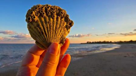 当贝壳还是人类主流货币时,人们为啥不去捡贝壳发财?原因太现实