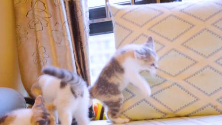 家里有5只哈士奇拆家小猫咪是一种什么体验?