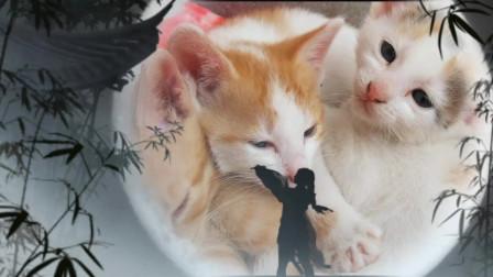 优美特效音乐视频03 可爱小猫咪 网络红歌 纯音乐 dj歌曲 捕捉精彩的瞬间 自然美景