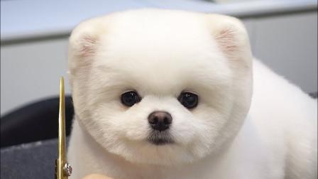 专给猫狗设计的好东西,高端大气上档次,网友:活的不如狗!