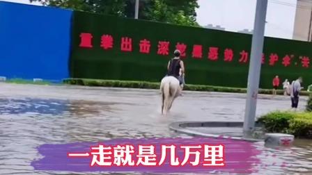 在商丘,不仅有车有房,还要有一匹马