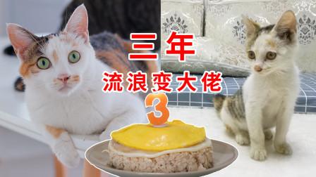 """流浪猫被收养3年,从亢奋到""""无欲无求"""",到底都经历了什么"""