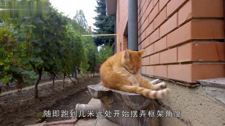 铲屎的想给猫主子拍写真,猫咪超合营,还首先凹起了造型