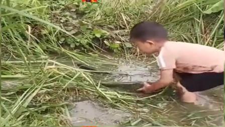 农村资源太好了,有水的地方就有鱼,真好