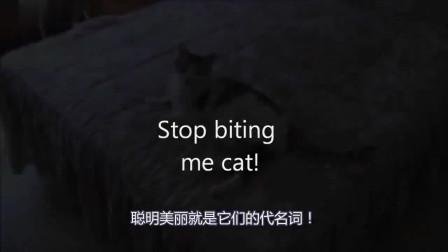 大约养了一只傻猫,让我哭笑不得,你们谁喜欢领走吧