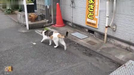 好伶俐的流浪猫, 饿了就到商店门口叫几声