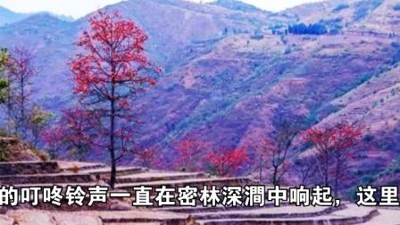 走遍云南看凤庆
