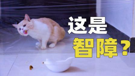 用保鲜膜堵住猫咪的去路,猫会怎么做?猫:懵了!