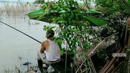 江湾深处好钓点,鳊鱼一斤多草鱼也很大,就是台钓挂底挂到哭